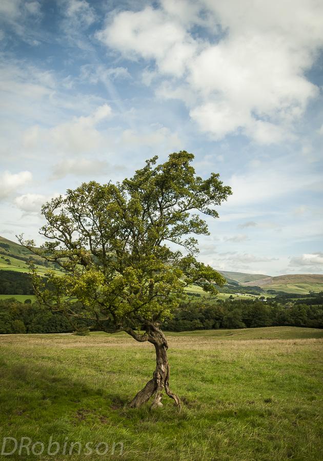 human like tree