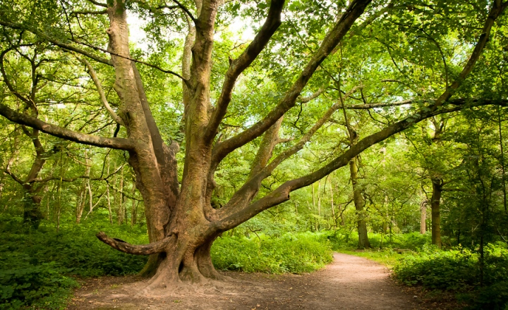 Ancient Woodland, Leicestershire