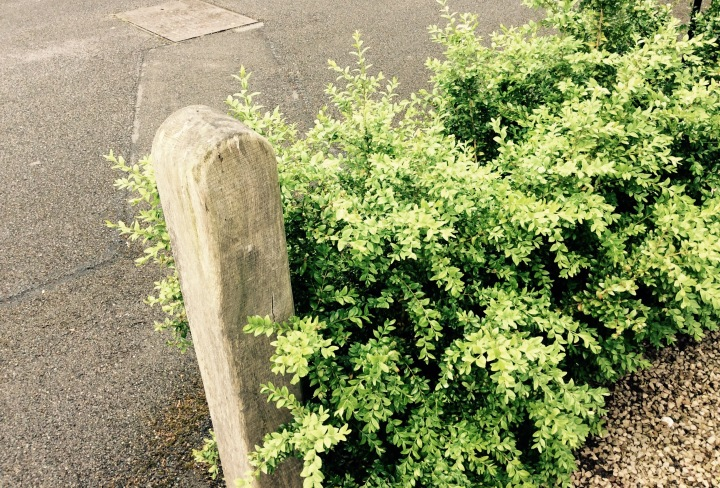 The robin on the gatepost