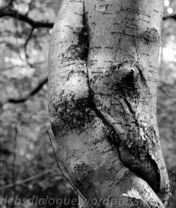 Do trees have a language of thier own?