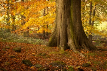 autumn-in-lancashire-2