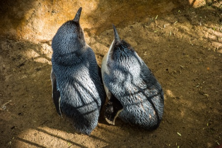 featherdale-animal-park-4884