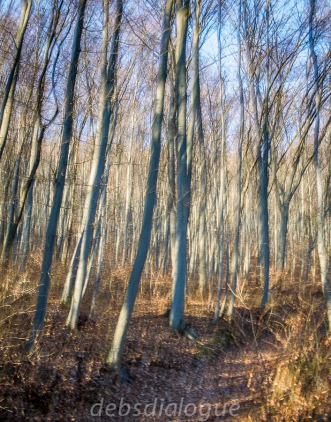 vienna-woods_klosterneuberg-6113