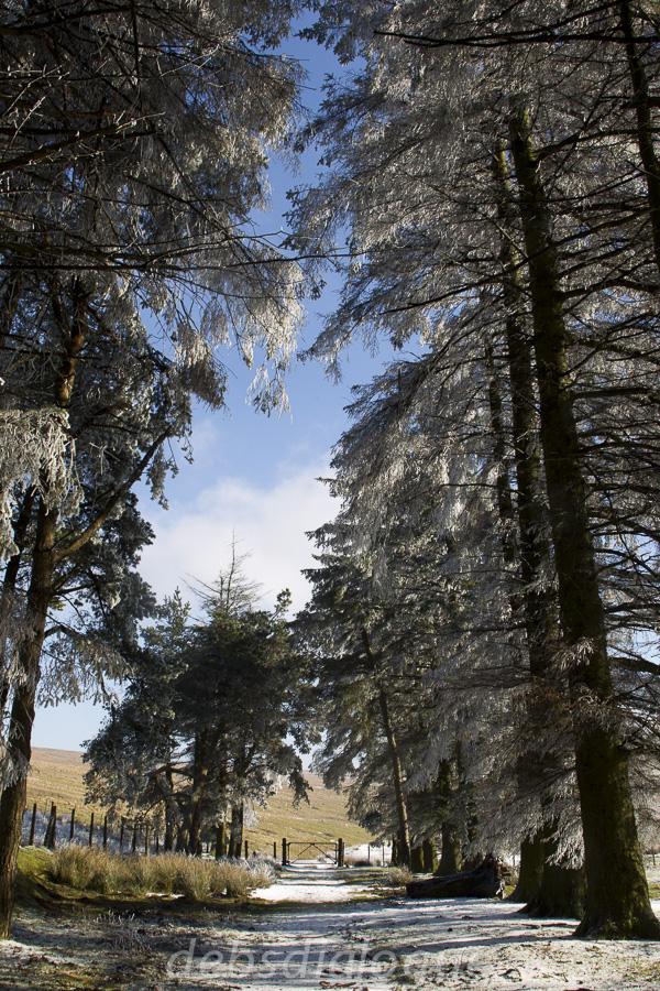 The quietness of snow