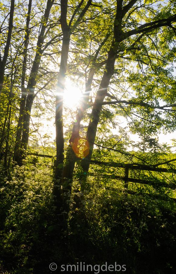 May morning -6939