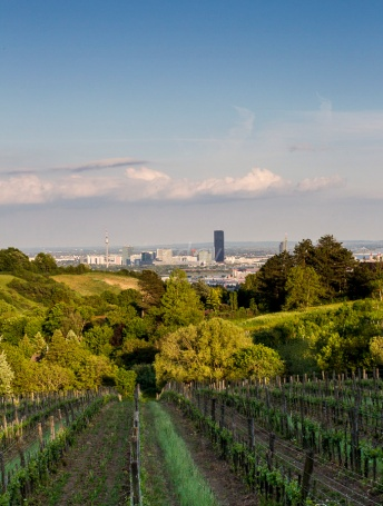 Grinzing Vineyards_ Vienna