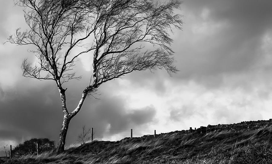 A meditation on winter trees