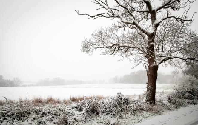 Constrasting seasonal change-7506