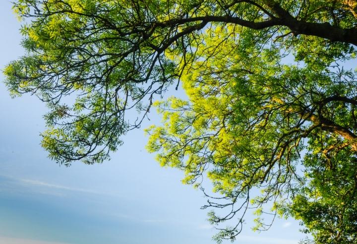 Breathe the Free Air- invigorate yourday!