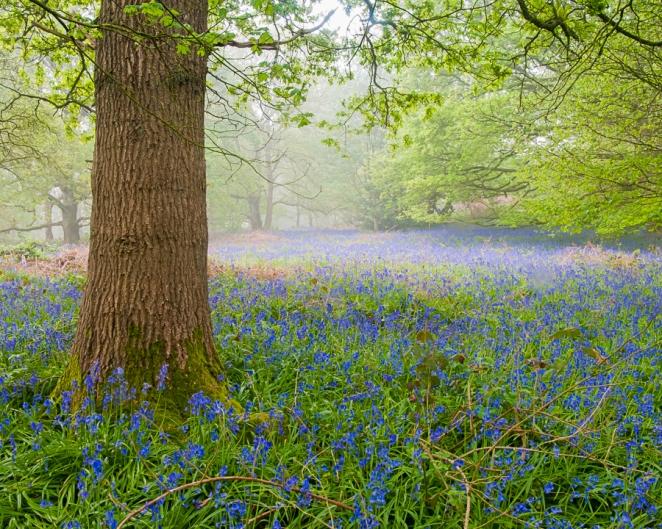 Burleigh Wood, Charnwood, Leicestershire, UK