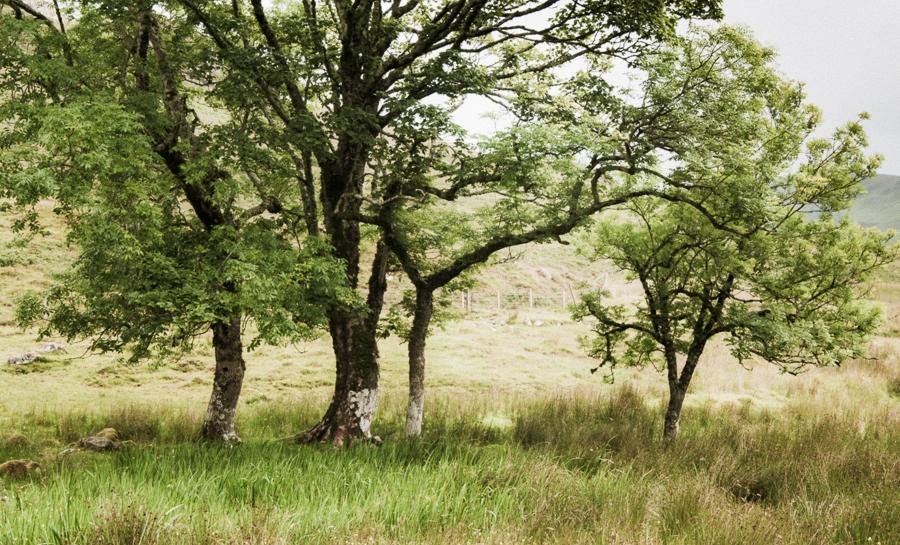 A Tree Meditation