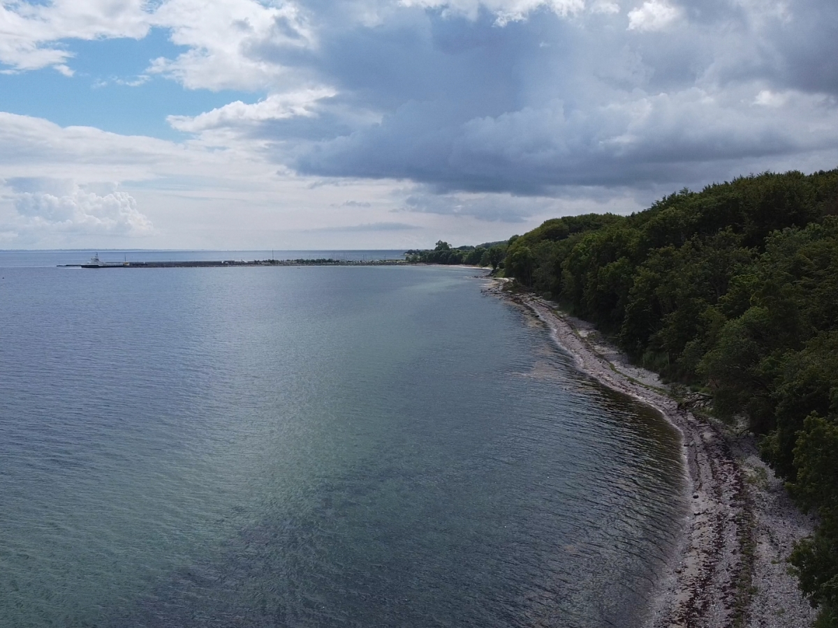 A Danish Coastal Woodland